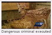 Bambi Executed